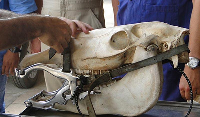 Imagem do post: Mastigação de equinos: entenda mais sobre a fisiologia desse processo