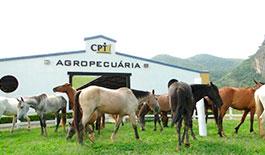 Curso Conhecendo os Cavalos