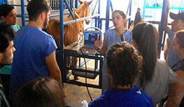 Curso de Ultrassonografia e Palpação Retal em Equinos