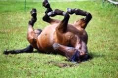 Imagem do post: 3.º Festival do Cavalo Lusitano em São Paulo