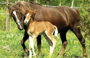 Imagem do post: 5 dicas essenciais para nutrição de cavalos recém nascidos