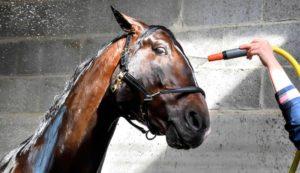 Imagem do post: 6 dicas de como cuidar de cavalos durante o verão