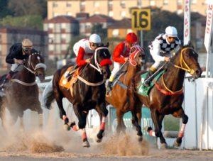 Imagem do post: Ração aumenta desempenho de cavalos de competição