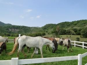 Imagem do post: A importância do perfil comportamental na equitação