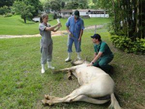 Imagem do post: Anestesia intravenosa total em Equinos