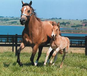 Imagem do post: Últimas Vagas para o Curso de Manejo Reprodutivo em Equinos – CPT Cursos Presenciais