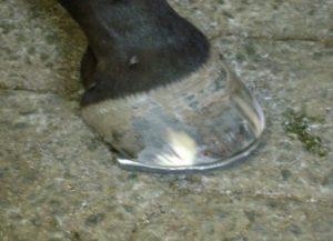Imagem do post: A saúde dos cavalos começa nos pés