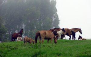 Imagem do post: Nutrição dos Equinos