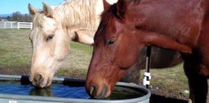 Imagem do post: A desidratação em equinos