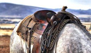 Imagem do post: A escolha da melhor sela para o seu cavalo
