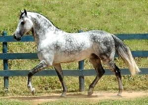 Imagem do post: A importância da Flexão no Adestramento do Cavalo Mangalarga-Marchador