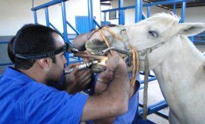 Imagem do post: A importância da odontologia na saúde dos cavalos