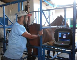 Imagem do post: A inseminação artificial em equinos