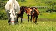 Imagem do post: Alimentação de Equinos- Cuidados no uso da Linhaça