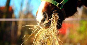 Imagem do post: Alimentos para cavalos: conheça os principais!