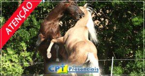 Imagem do post: ATENÇÃO: Você sabe castrar equinos?