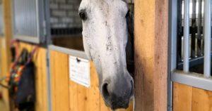 Imagem do post: Baias para cavalos: como construir as melhores?