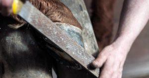 Imagem do post: Casqueamento de cavalos: conheça os pontos principais