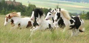 Imagem do post: Cavalo Percheron – Graciosidade e vigor