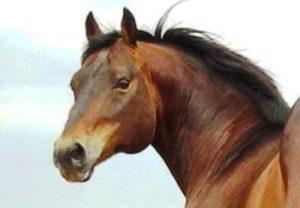 """Imagem do post: """"Cara Inchada"""", Uma doença rara em Equinos"""