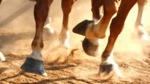Imagem do post: Claudicação: principal responsável pela queda no desempenho dos cavalos