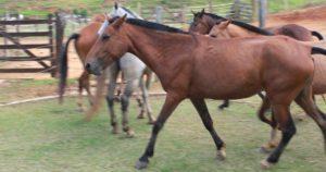 Imagem do post: Como cuidar de cavalos: conheça o básico!