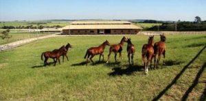 Imagem do post: Como iniciar uma criação de cavalos bem sucedida