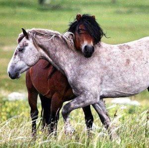 Imagem do post: Compreenda o ciclo de vida dos equinos