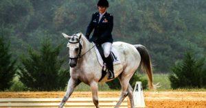 Imagem do post: Conheça as diferenças básicas entre o hipismo e equitação!