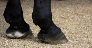 Imagem do post: Cuidados com as infecções nos cascos de cavalos