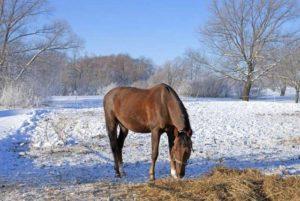 Imagem do post: Cuidados com o cavalo durante o inverno