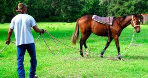 Imagem do post: Doma de cavalos: por que a técnica é importante?