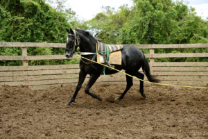 Imagem do post: Como realizar a doma de cavalos