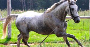 Imagem do post: Doma racional para cavalos: conheça a técnica e suas vantagens!