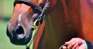 Imagem do post: Embocaduras para cavalos: veja os tipos, consequências do uso e muito mais!