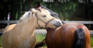 Imagem do post: Entenda como funciona o exame andrológico em equinos