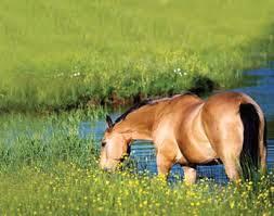Imagem do post: Equinos – Em busca da alimentação perfeita