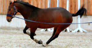 Imagem do post: Fraturas em equinos: entenda a importância do exame para detecção