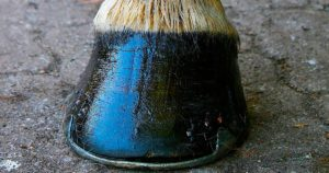 Imagem do post: Infecções nos cascos de cavalos: saiba evitar esse mal