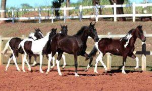 Imagem do post: Informações importantes para adquirir um cavalo
