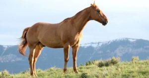 Imagem do post: Intoxicação por uréia em equinos