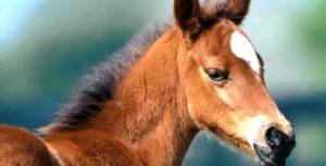 Imagem do post: Já ouviu falar no bragnatismo/prognatismo em equinos?