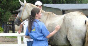 Imagem do post: Lombalgia em equinos: atenção na queda no rendimento dos animais!