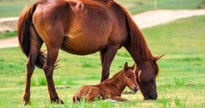 Imagem do post: Melhoramento genético em equinos: conheça as principais técnicas!