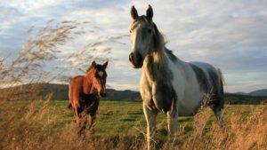 Imagem do post: O Comportamento dos Equinos