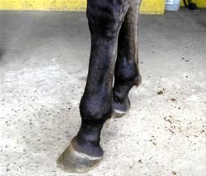 Imagem do post: O que causa o defeito dos aprumos em equinos?
