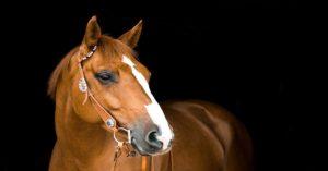 Imagem do post: O que você sabe sobre as principais doenças de pele em equinos?