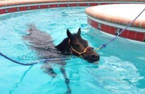 Imagem do post: O sucesso da fisioterapia para equinos