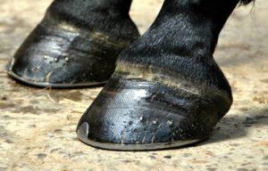 Imagem do post: Por que realizar a ferração em cavalos?