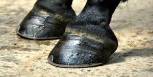 Imagem do post: Porque dar atenção especial aos cascos dos equinos?
